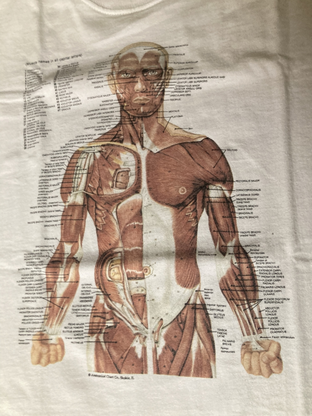 Anatomical Chart Co Muscular System T-Shirt Close Up